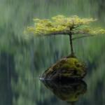 2012-Wildlife-Photography3